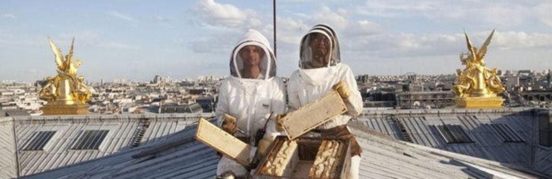 L'apiculture sur les toits de Paris